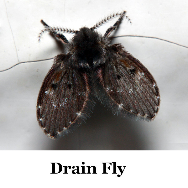 Identifying Flying Insects | ThriftyFun